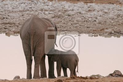 Baby elephant nursing de madre en waterhole