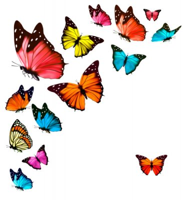 Póster Background with colorful butterflies. Vector.