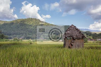 Bambú arrojado en un campo de arroz en Tailandia