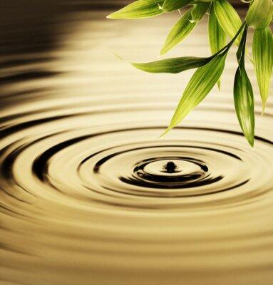 Bambú Hojas frescas sobre el agua