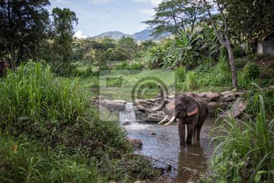 Baño del elefante - Tailandia