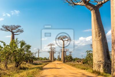 Baobabs avenida