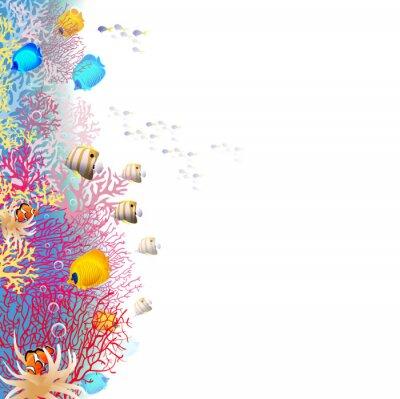 Póster barrera coralina