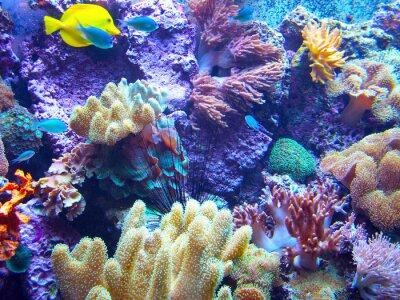 Póster Barriera Corallina 2