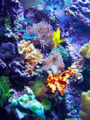 Póster Barriera Corallina