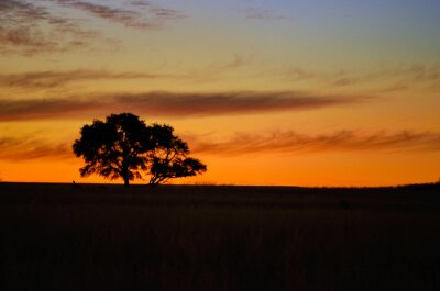 Beautiful african sunset landscape and tree silhouette in savanna