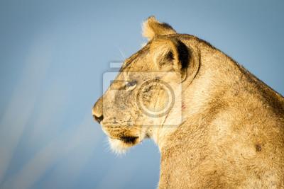 Beautiful wildlife in south luangwa national park, zambia, africa