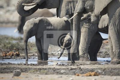 Becerro de elefante joven en un agujero de agua.