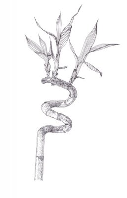 Póster Black ink dots drawing sketch of bamboo branch isolated on white background. Hand drawn illustration of beautiful bamboo brunch spiral with leaves.