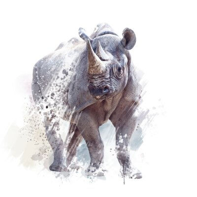 Póster black rhinoceros watercolor on white background