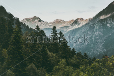 Póster Bosque de coníferas y montañas Paisaje Viaje sereno paisaje verano verde