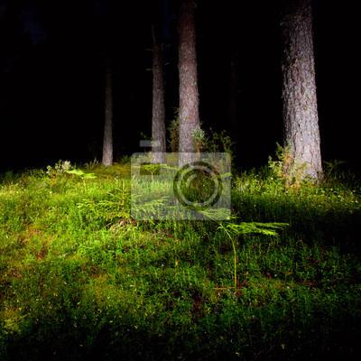 Bosque de la noche