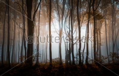 Póster Bosque de niebla de otoño. Montañas de los Balcanes, Bulgaria.
