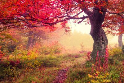Póster bosque de otoño