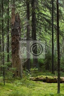 Bosque del misterio