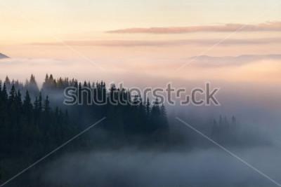 Póster Bosque en las montañas cubiertas de niebla.