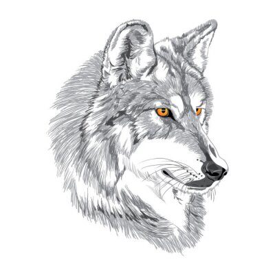 Póster Bosquejo hocico del lobo