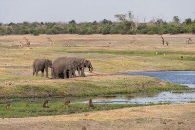 Botswana plains juego