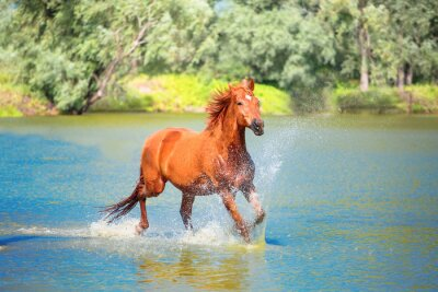 Póster caballo