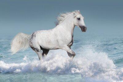 Póster Caballo árabe blanco correr galope en las olas en el océano