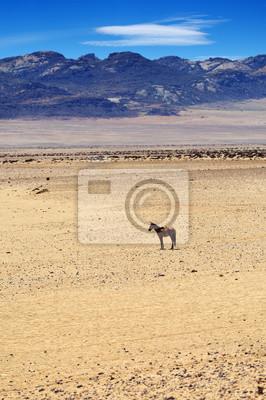 Caballo en Succulent Desierto de Karoo, Namibia