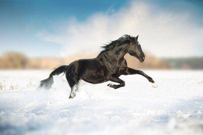 Póster Caballo negro correr en la nieve