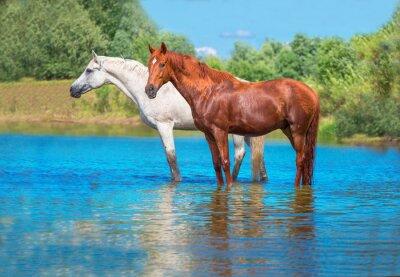 Póster caballos