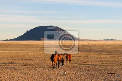 Caballos salvajes del Namib