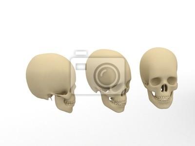 Póster cabeza
