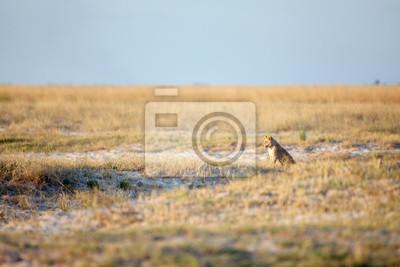 Cachorros de león en bushveld