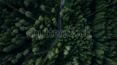 Póster Calle estrecha entre bosques, vista de drone