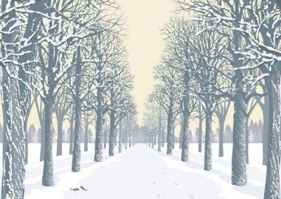 Póster Callejón con árboles nevados siluetas en un parque