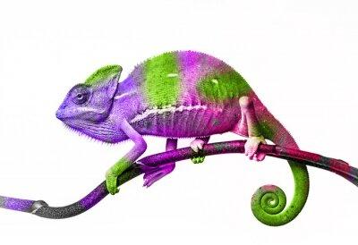 Póster Camaleón - colores