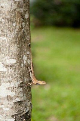 Póster Cambiante lagarto en el tronco del árbol