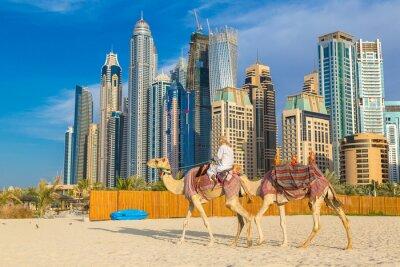 Póster Camel en Dubai Marina