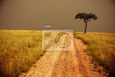 camino a través del, árbol solitario sabana