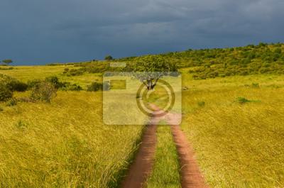 Camino africano en la sabana, parque nacional de Masai Mara, Kenia