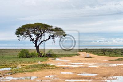 Camino de tierra a la cacerola de Etosha, Namibia
