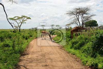 Camino en Serengeti, Tanzania