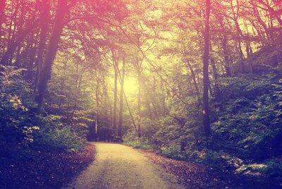 Póster Camino forestal