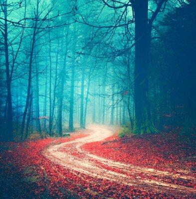 Póster Camino mágico bosque de la vendimia