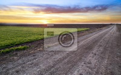 Camino rural y campo de trigo verde sobre la puesta de sol