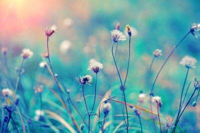 Póster Campo de hierbas de la vendimia azul al amanecer
