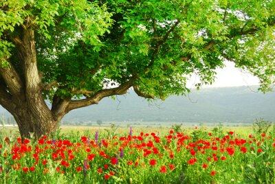 Campo de la amapola y el gran árbol verde