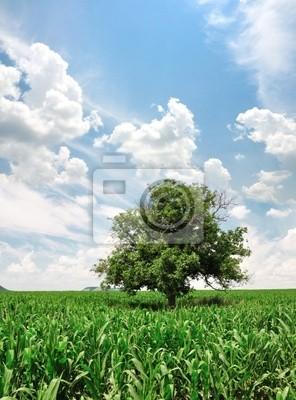 Campo de maíz verde y árbol solo