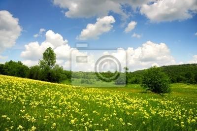 Campo verde con amarillo y las nubes blancas