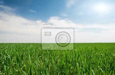 Campo verde en summerday