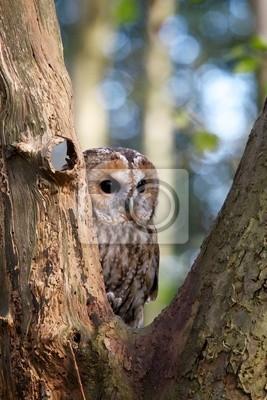 Cárabo en un árbol
