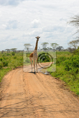 Carretera africana, Tanzania