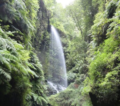Póster Cascada Cascada Los Tilos (La Palma, Islas Canarias)